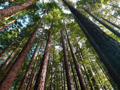 CIU partners in effort to plant over 3.3 million trees in South Carolina